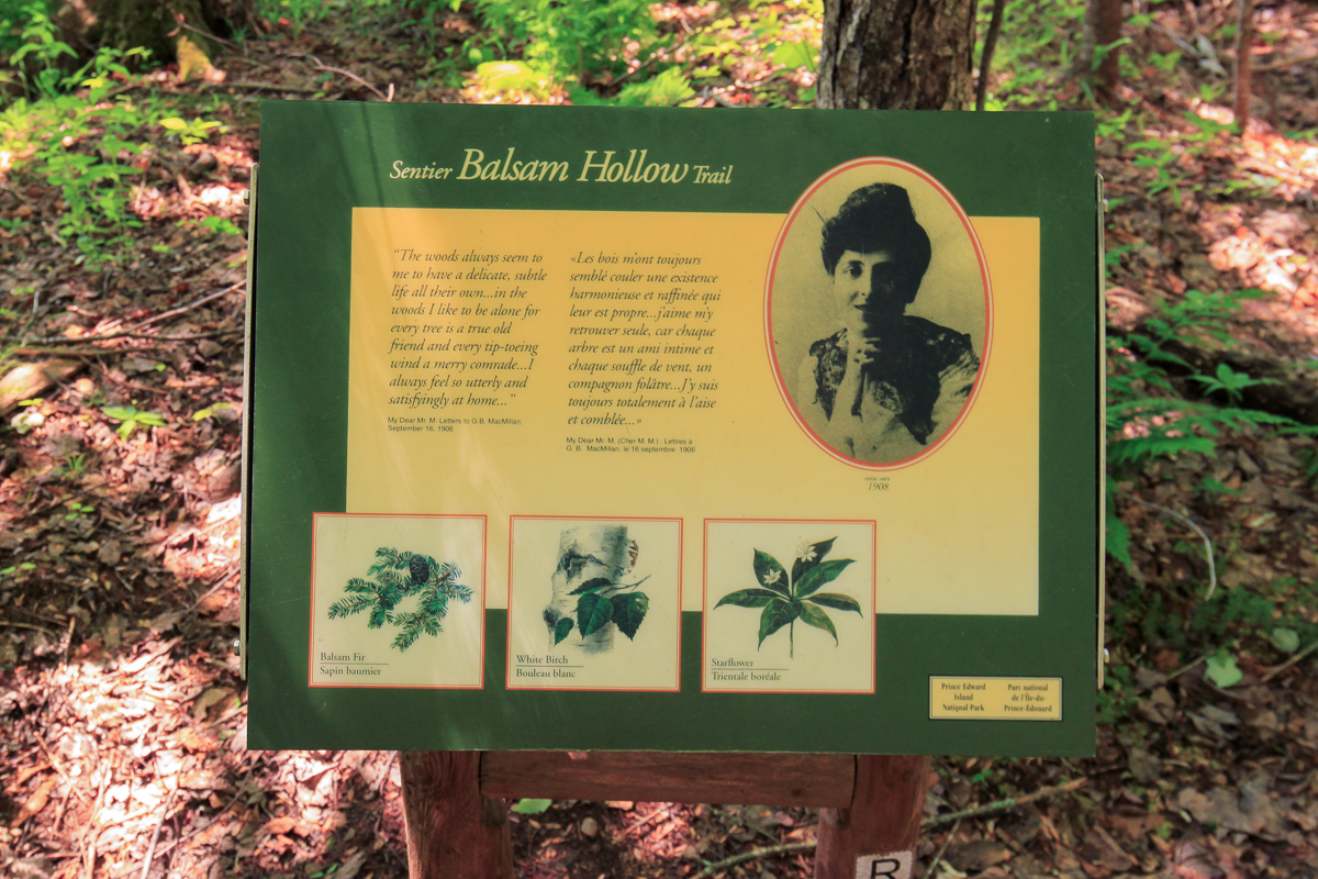 Balsam Hollow Trail sign
