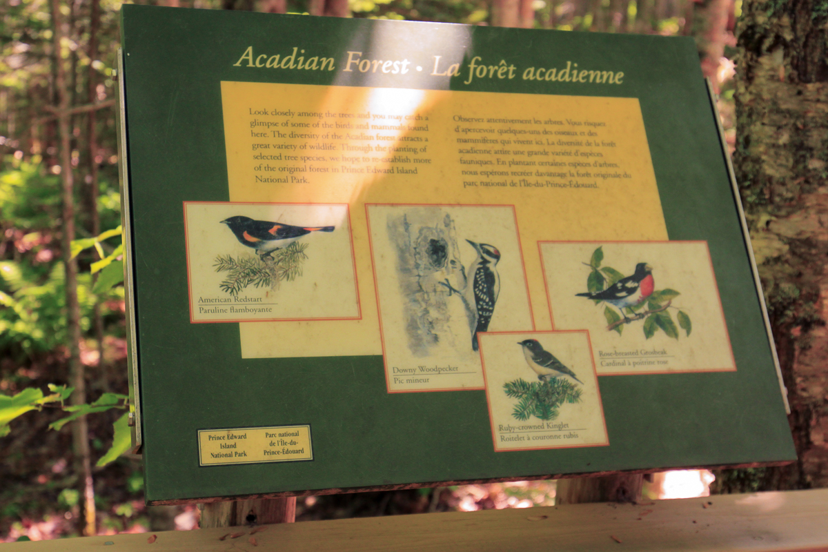 Acadian forest sign